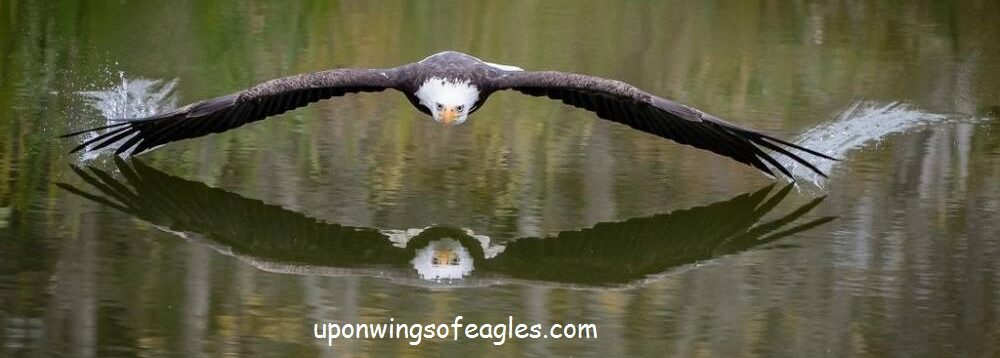 Upon Wings of Eagles